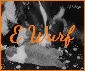 E Wurf