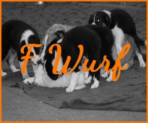 F Wurf