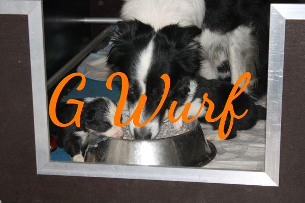 G Wurf