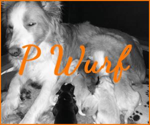 P Wurf