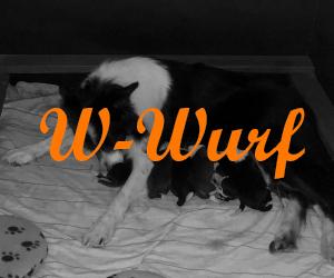 W Wurf