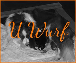 U Wurf