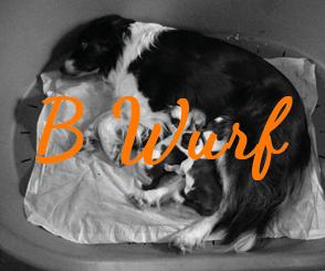 B Wurf