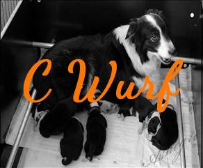 C Wurf
