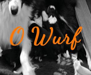 O Wurf