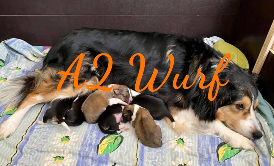 A2 Wurf