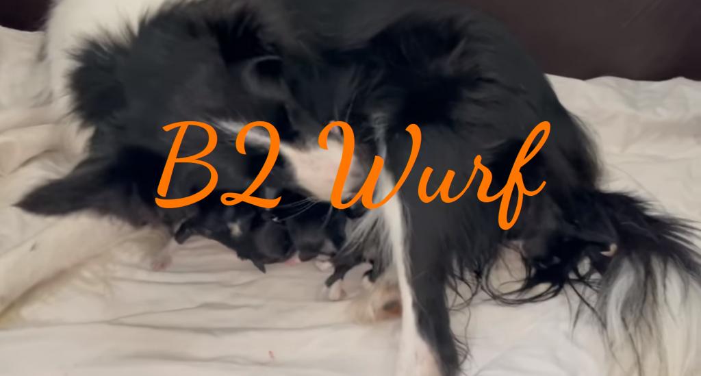 B2 Wurf