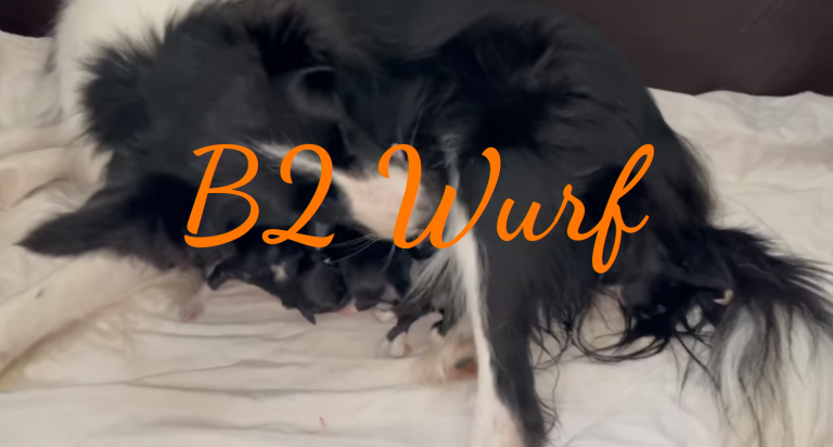 Read more about the article B2 Wurf